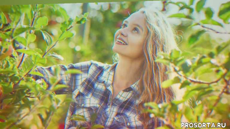 семена яблони посадка, семена яблони, сад и огород, во саду ли в огороде, урожайный огород, агротехника, секреты агротехники, самые вкусные сорта
