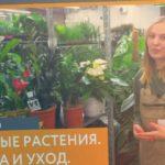 Ароидные растения - выбор, посадка и уход   Советы биолога 7ЦВЕТОВ
