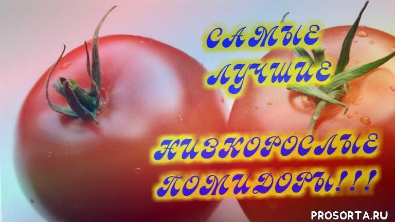 хороший сорт помидор, низкорослый гибрид, отзыв о низкорослых помидорах, низкорослые сорта томатов, низкорослые помидоры, томаты, помидоры