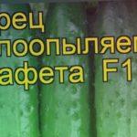 Огурец Эстафета (Огурец). Краткий обзор, описание характеристик, где купить семена cucumis sativus