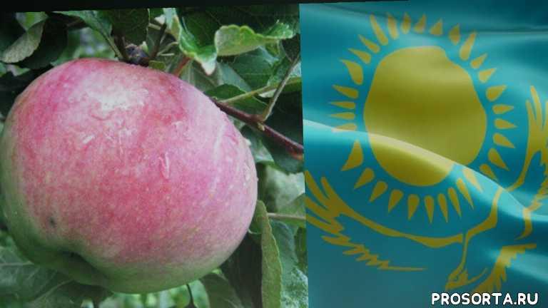 последние новости, мир 24, чем известен казахстан, вкусные яблоки, богатый урожай, урожай казахстана, казахстан сбор, казахстан яблоки