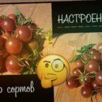 """? Обзор на помидоры ? """" Блэк черри"""" от Selekt"""