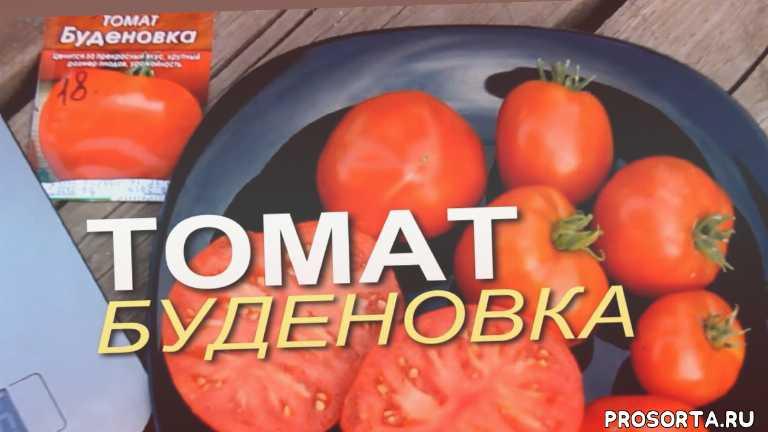 дача, дом сад огород, теплица помидор, урожайность томатов, томаты в теплице, описание сортов томатов, томат помидор, плод томатов