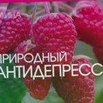 "МАЛИНА. Питомник ""Сады Урала"""