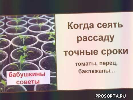 рассада в январе, рассада в марте, рассада в феврале, рассада высаживать, когда сеять баклажан на рассаду, когда сеять перец на рассаду, когда сеять томат на рассаду, лунный календарь сеять рассаду 2020