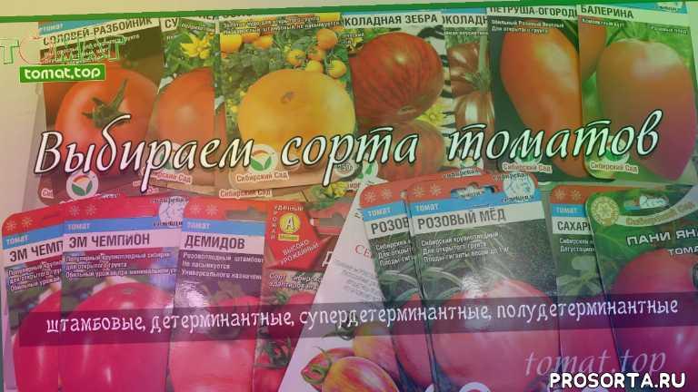 штамбовые томаты, детерминантные томаты, обзор семян томатов, обзор сортов томатов, помидоры для открытого грунта, низкорослые помидоры, на 2020 год, выбор сортов томатов