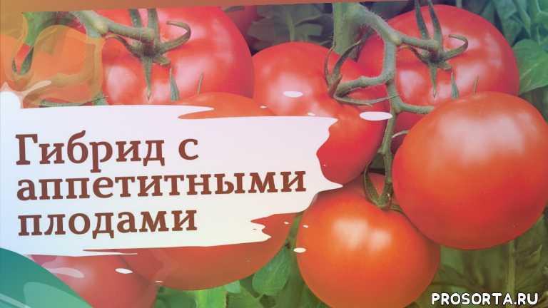 бобкат, семена, дача, томаты, помидоры, сад, огород, сады россии