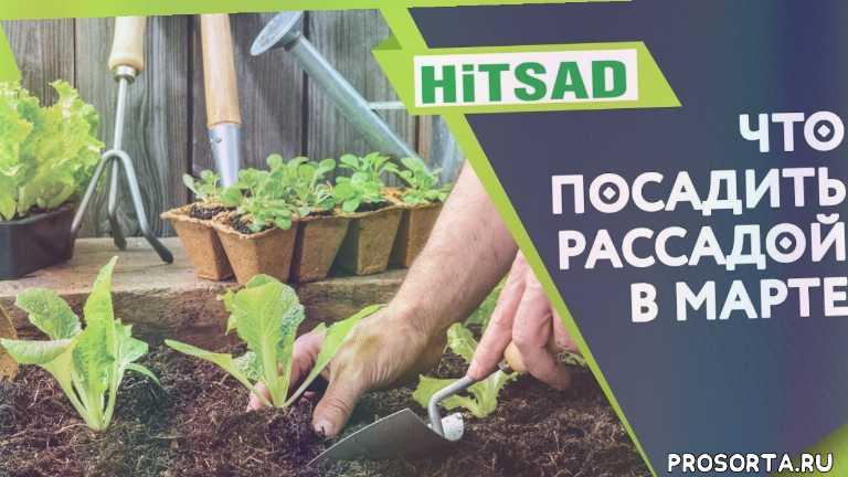 как посадить рассаду в домашних условиях, можно посадить, рассада высаживать, посевной календарь на март 2020, когда сажать рассаду, какие цветы посадить в марте, что посадить на рассаду, рассада +в марте