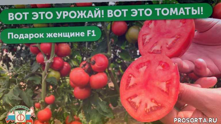 высокая урожайность, скороспелые сорта помидор, скороспелые сорта томатов, скороспелые помидоры, урожайная грядка, высокая седек, томаты детерминантные крупноплодные, томаты детерминантные сорта