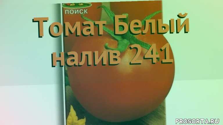 томат обыкновенный белый налив 241 обзор как сажать, томат обыкновенный белый налив 241 обзор, томат белый налив 241 обзор как сажать, травы, обыкновенный томат белый налив 241 обзор как сажать, обыкновенный томат белый налив 241 обзор, обыкновенный томат, обыкновенный томат белый налив 241