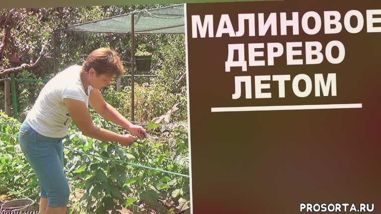крепыш, таруса, любимая усадьба, сад, дача, дачные советы, подкормки, для малины