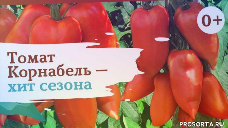 корнабель, семена, томаты, помидоры, дача, огород, сад, сады россии