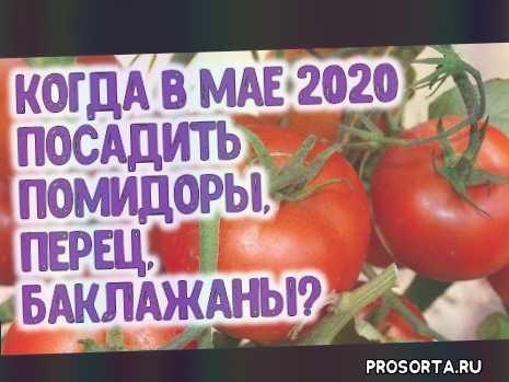 когда садить, посадка перца в мае 2020, посадка помидоров в мае 2020, посадка помидоров, посадка баклажанов, когда посадить баклажаны, когда посадить перец, рассада