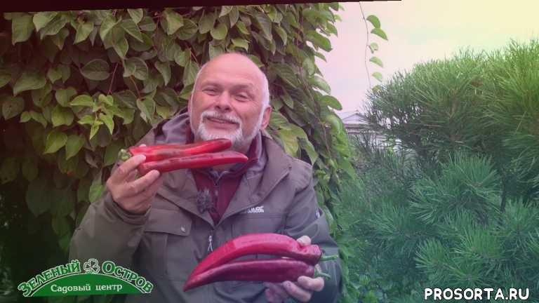 перец палермо, перец, сидельников, огород, саженцы, посадочный, зеленый остров, садовый центр
