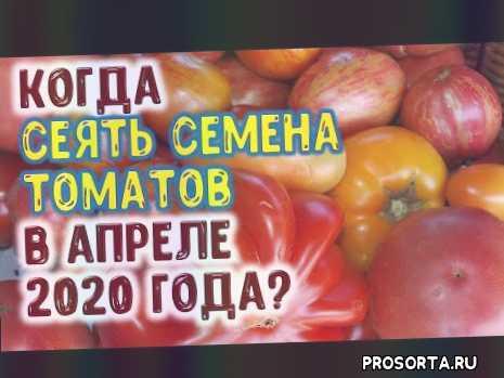 посев помидоров в апреле 2020, когда сажать томаты в открытый грунт, семена томатов, выращивание рассады томатов, посев томатов, семена, посадка помидор, рассада помидор