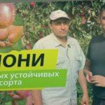 Яблони: два самых устойчивых к парше сорта