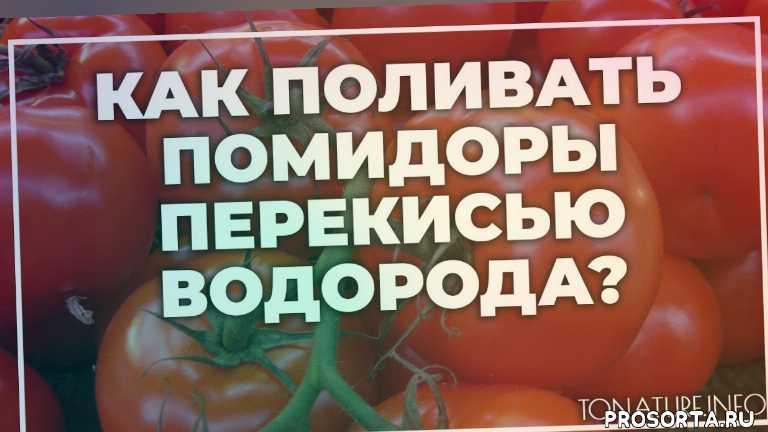 земля дляпомидоры, почва для помидоры, помидоры полив, помидоры вредители, помидоры болезни, помидоры удобрение, помидоры подкормка, помидоры пересадка