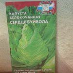 Один из лучших сортов ранней белокочанной капусты