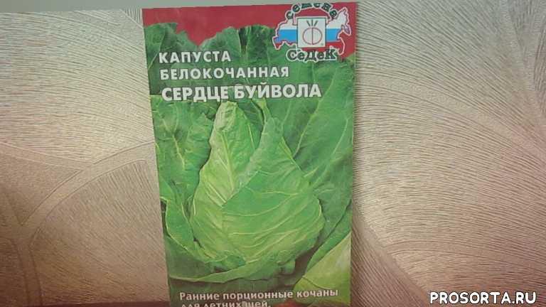 Один из лучших сортов ранней белокочанной капусты.24.11.2019