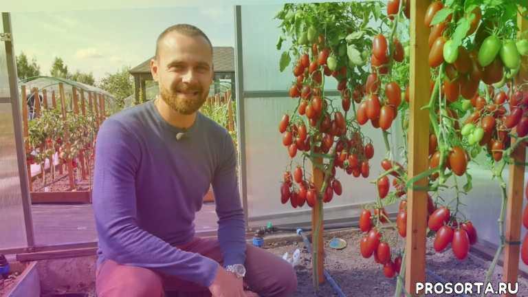 гибриды, семена, сезон урожая, время урожая, храним урожай, сезон, удобрения, работы на грядке
