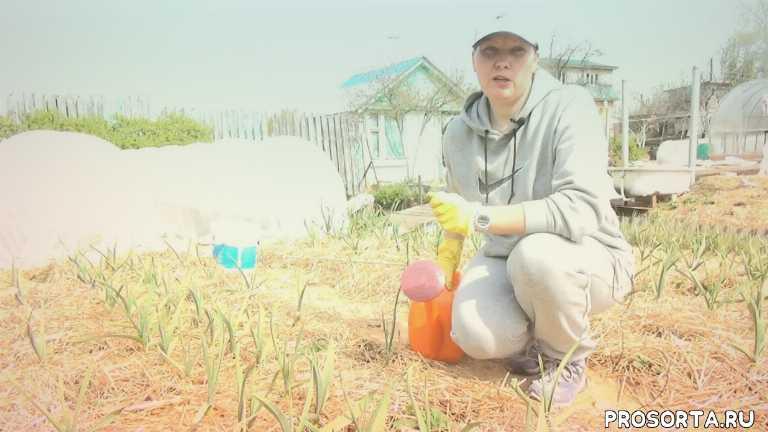 гуминовые подкормки, гуми-оми, весной, удобрение, чеснок, лук, огород, сад