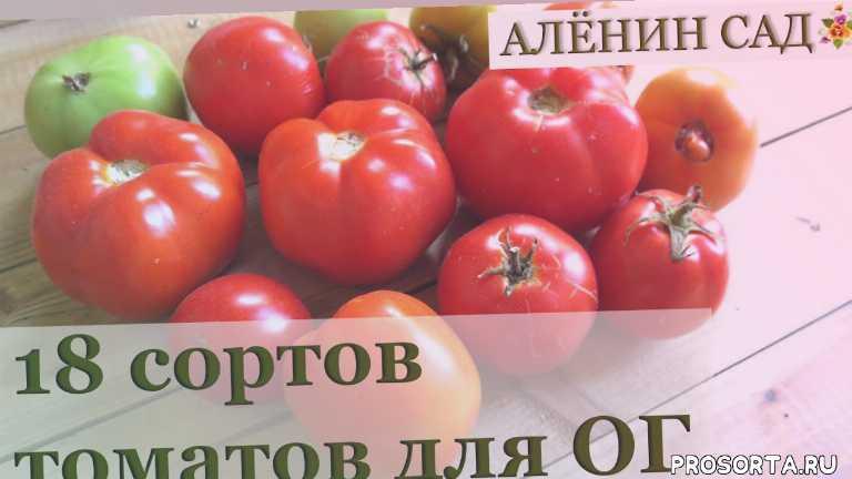 низкорослые томаты, детерминантные сорта томатов, аленин сад, томаты для открытого грунта