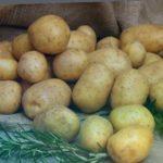 """Лучшие сорта картофеля - сорта """"Удача"""" и """"Гала"""""""