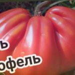 Томат ЦАРЬ ТРЮФЕЛЬ ? от СибСада. Царский томат.