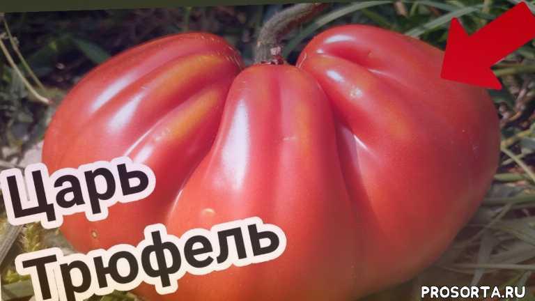 царский томат, черный трюфель, томаты сибири, сливка, трюфеля, трюфель, трюфель оранжевый, трюфель золотой