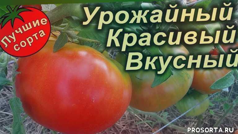 лучшие сорта томатов, самые урожайные томаты 2019 года, семена томатов самые урожайные, самые урожайные томаты, самые урожайные сорта томатов, семена урожайных помидор, семена помидоров лучшие, урожайные помидоры
