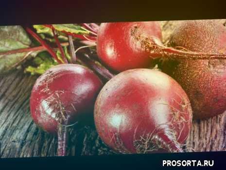 свекла, бурак, буряк, опыление, урожай, посев, микроклимат, климат