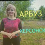 АРБУЗ. Как посадить арбуз в открытый грунт. Как сажать арбуз.  ДАЧА 2020