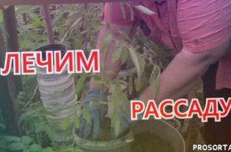 выращивание рассады, теплица, пересадка, скручивание листьев, рассада, золотова агроном, татьяна золотова, деревня