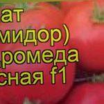 Томат обыкновенный Андромеда красная f1. Краткий обзор, описание характеристик, где купить семена
