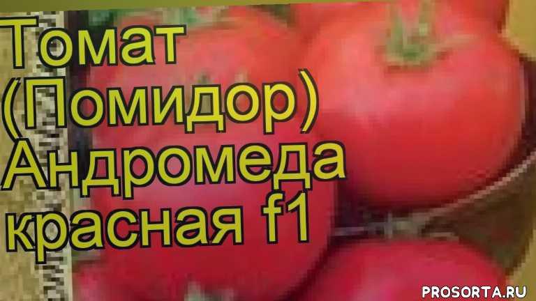 томат обыкновенный андромеда красная f1 уход, купить семена томата обыкновенного андромеда красная f1, семена томата обыкновенного андромеда красная f1, видео томат обыкновенный андромеда красная f1, томат обыкновенный андромеда красная f1 описание характеристик, краткий обзор томат обыкновенный андромеда красная f1, томат обыкновенный andromeda f1, томат обыкновенный андромеда красная f1 описание
