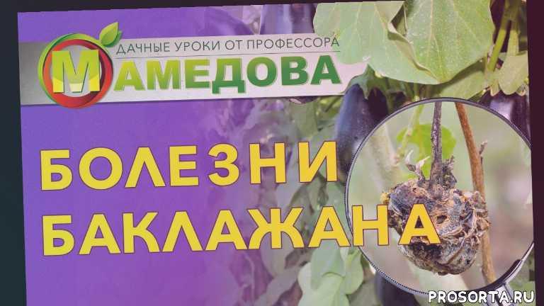 болезни баклажан, болезни баклажанов, баклажаны польза и вред для здоровья, вредители на баклажанах, серая гниль на баклажанах, тля на растениях, тля на цветах, тля на баклажанах