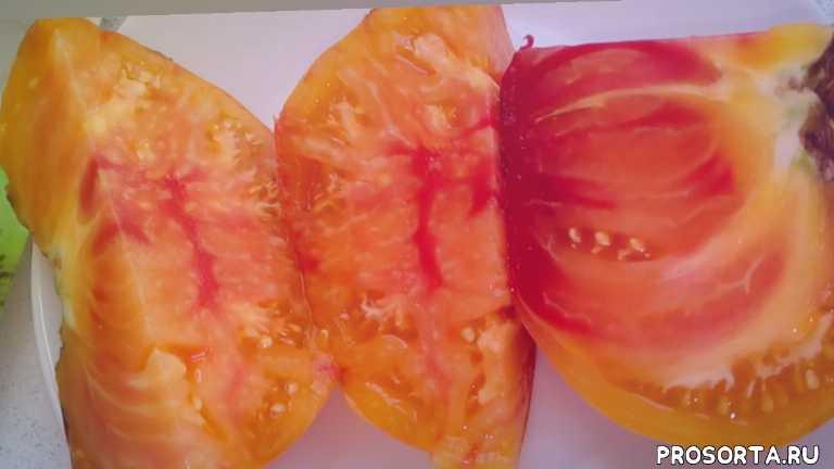 урожайный сорт, варенье из томатов, украшение грядки, загадка природы, формировка томатов, что можно посадить рядом, загущенная посадка, экзотические томаты