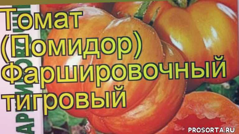 томат фаршировочный тигровый отзывы, где купить семена томат фаршировочный тигровый, купить семена томата фаршировочный тигровый, семена томат фаршировочный тигровый, видео томат фаршировочный тигровый, томат фаршировочный тигровый описание характеристик, краткий обзор томат фаршировочный тигровый, solanum lycopersicum farshirovochnyj tigrovyj