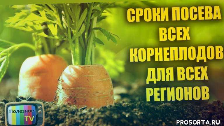 посевной календарь, сроки посева рассады, рассада из семян в домашних условиях, как вырастить рассаду из семян, рассада купить, рассада выращивание, купить семя, семена рассада