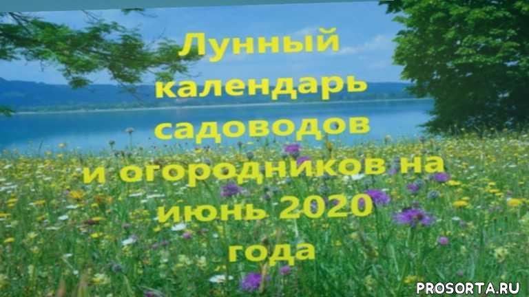 июнь 2020, лунный календарь, дачно-огородные работы на июнь, лунный календарь на июнь 2020 года, прививка плодовые деревья, культура укоренение черенков, благоприятные дни для посадки саженцев, запрещенные для посадки дни в июне