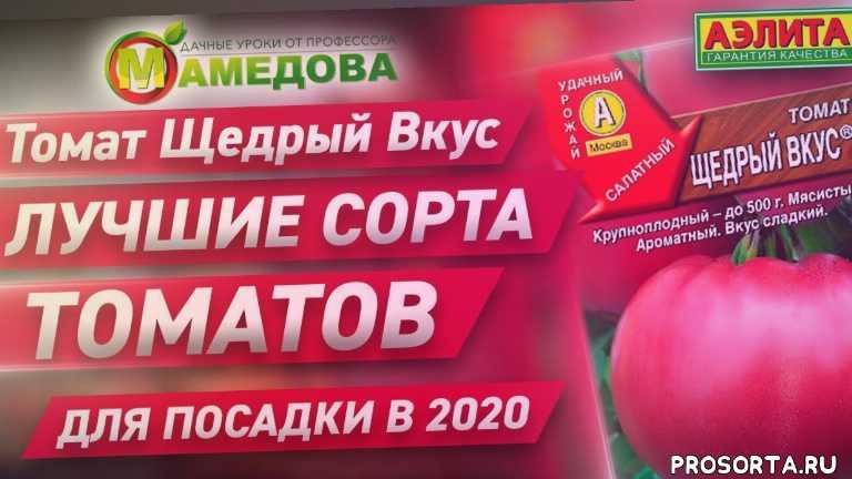 томаты на 2020 год, томаты посадка, во саду ли в огороде томаты, во саду ли в огороде, лучшие сорт томатов, обзор сортов томатов, урожайные сорта томатов для теплиц, урожайные сорта томатов для открытого грунта