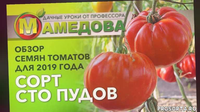обзор семян, во саду ли в огороде, обзор семян 2019, лучшие сорта помидор для теплиц, томаты 2019, томаты посадка и уход, сто пудов томат, томат сто пудов аэлита