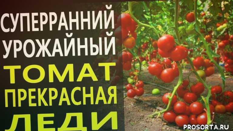 томаты от ильиничны, ильинична, эксперты в саду, земляниа эксперты в саду, канал земляника, земляника, новинки томатов, томаты 2020