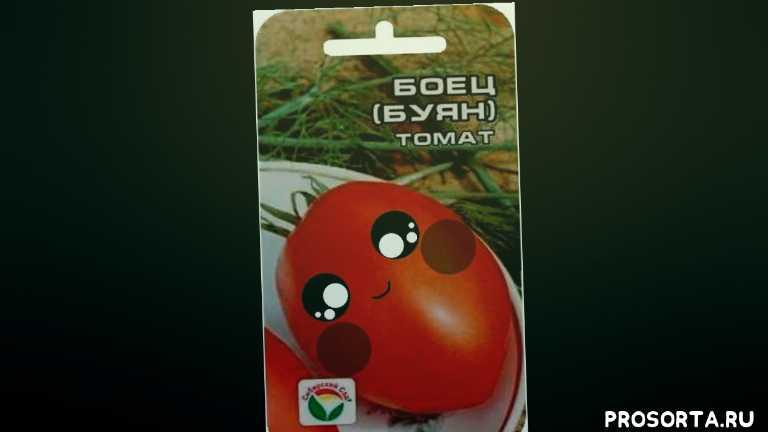 сорт буян, описание, отзывы, как растет, помидоры, томат, боец, буян