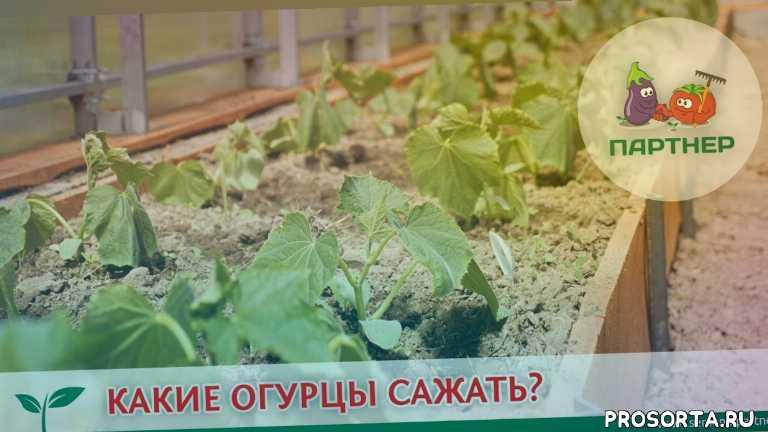 голова садовая, во саду ли в огороде, урожайная грядка, урожайный огород, блокин-мечталин василий, блокин-мечталин в. и., блокин-мечталин, агрофирма партнер