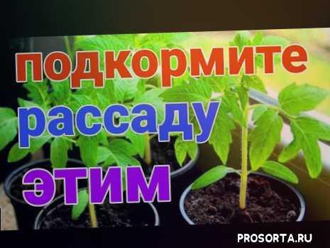 анастасия мухлынина, посадка открытый грунт, плодородие почвы, природное земледелие, садоводы и огородники, дача сад, урожайный огород, сад и огород своими руками