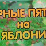 Чёрные пятна на листьях яблони: Причины, лечение и профилактика