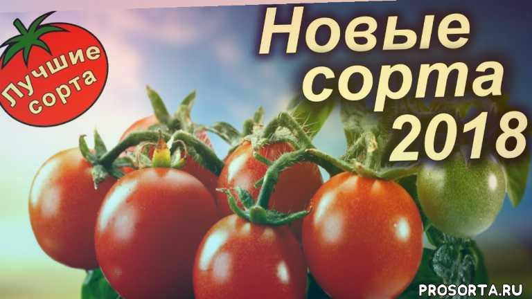 купить семена томатов в украине, купить семена томатов почтой, где купить семена томатов, купить семена томатов, новые сорта помидор, урожайные сорта помидор, самые урожайные помидоры, урожайные помидоры