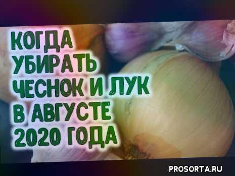 лунный календарь на август 2020, агрогороскоп август 2020, заготовка, культура, советы, как выращивать лук, выращивание, лук севок