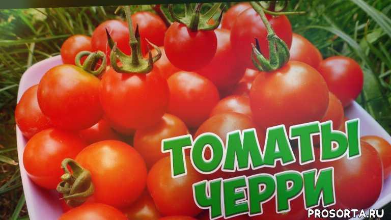 tomato, обзор, помидоры на зиму, томат, томаты, помидоры, помидор, семена томатов
